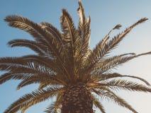 Stor markis av en palmträd som underifrån ses arkivbild