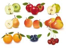 stor mogen fruktgrupp royaltyfri illustrationer