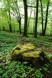 Stor mossig trädstubbe Arkivbild