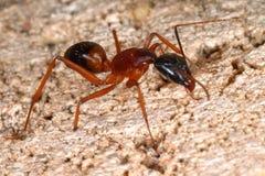 stor myra Arkivfoto