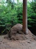 Stor myrstack bredvid ett träd Royaltyfri Fotografi