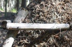 Stor myrstack i granskogen royaltyfri foto