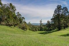 Stor naturlig tropisk trädgård Arkivfoto