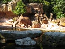 Stor noshörning Royaltyfri Foto