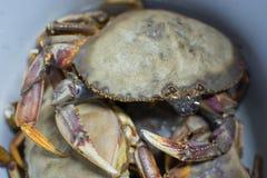 Stor ny krabba arkivbilder