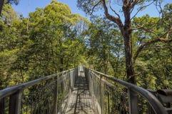 Stor Otway nationalpark Överkanten för det Otway flugaträdet går arkivbild