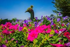 Stor påfågelfågelminiatyr som göras från grönt gräs och träd med petuniablomman - foto royaltyfri bild