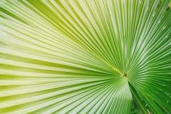 Stor palmblad i färglager Arkivfoto