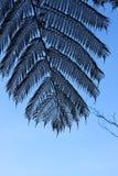 Stor palmblad med blå himmel Arkivfoto