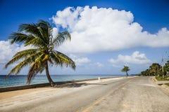 Stor palmträd på sidan av vägen Royaltyfri Foto