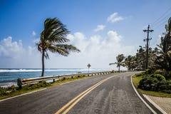 Stor palmträd på sidan av vägen Arkivbild
