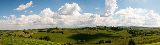 Stor panorama av vingården med stora skuggor av moln Royaltyfri Foto