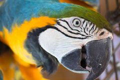 Stor papegoja Arkivfoto