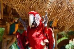 stor papegojared Fotografering för Bildbyråer