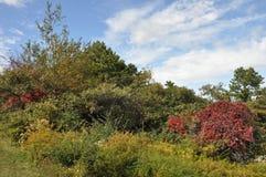 Stor Pocono delstatspark i Pennsylvania fotografering för bildbyråer