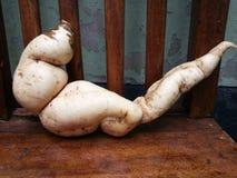 stor potatis arkivfoto