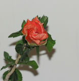 Stor prålig orange hibiskusblomma Royaltyfri Fotografi
