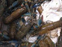 Stor räka som är till salu i fiskmarknad Royaltyfri Foto