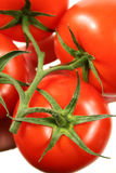 stor röd ripened tomatvine Arkivfoton