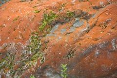 Stor röd rock Arkivbild