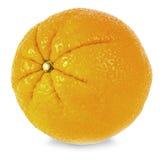 Stor söt apelsin royaltyfria bilder