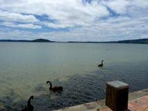 Stor sötvattensjö i Roturua, Nya Zeeland royaltyfri foto