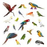 Stor samling av fågeln, älsklings- och exotiskt, i olik position arkivbilder