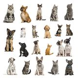 Stor samling av 10 hundkapplöpning och 10 katter i olik position Arkivbilder