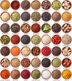 Stor samling av olika kryddor och örter Royaltyfri Foto
