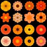 Stor samling av olika orange modellblommor som isoleras på svart Arkivfoto