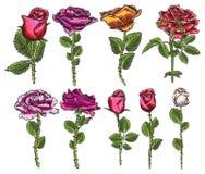 Stor samling av rosor och blad för design Uppsättning av högt deta royaltyfri illustrationer