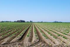 stor sikt för jordbruksmark Arkivbilder
