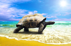 stor sköldpadda Royaltyfri Fotografi