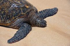 Stor sköldpadda i sanden Arkivfoton