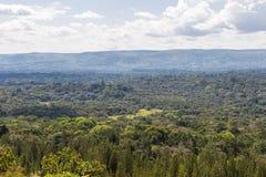 Stor skog i Kenya Kakamega Arkivbild