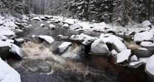 stor skogflodvinter Royaltyfri Fotografi
