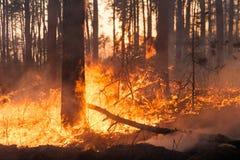 Stor skogsbrand sörjer in ställningen arkivfoto