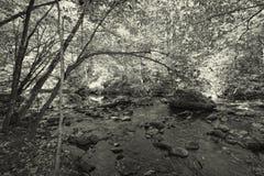 Stor Smokey Mountain Park Forest Black och vit Arkivbild