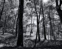 Stor Smokey Mountain Park Forest Black och vit Fotografering för Bildbyråer