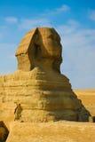 stor sphinx Arkivfoton