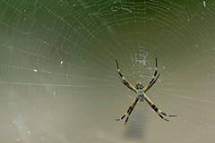 Stor spider1 Arkivfoto