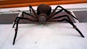 Stor spindel Royaltyfri Foto