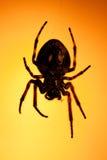 stor spindel Royaltyfria Foton