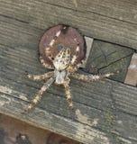 Stor spindel fotografering för bildbyråer
