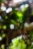Stor spindel Royaltyfri Fotografi