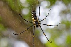 Stor spindel Arkivbilder