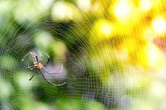 stor spindel för natur, lös spindel med oskarp bakgrund, rengöringsduk Royaltyfri Foto