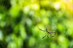 stor spindel för natur, lös spindel med oskarp bakgrund, rengöringsduk Arkivbild