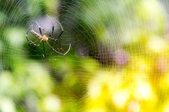 stor spindel för natur, lös spindel med oskarp bakgrund, rengöringsduk Arkivbilder