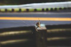 Stor spindel på en rengöringsduk nära en väg Fotografering för Bildbyråer